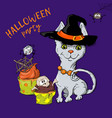 cartoon cute cat character in a witch s hat with a vector image