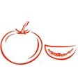 tomato and segment vector image