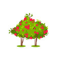 two bushes with cute bright pink roses beautiful vector image