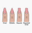 different nail shapes vector image
