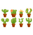 Green mexican cactus plant or cacti succulent in