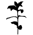 Herb plant vector image vector image
