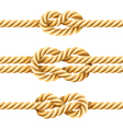 rope knots vector image vector image