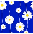 Seamless daisies pattern vector image