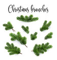 set fir branches christmas tree pine conifer vector image vector image