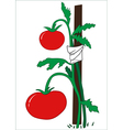 The bush of ripe tomatoes vector image vector image