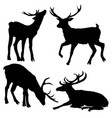 beautiful noble proud sika deer are ruminant vector image