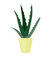 house plant aloe vers in flower pot isolation vector image vector image