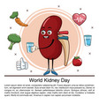 world kidney day infographic cartoon vector image