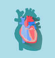 human heart cross section anatomical flat design vector image vector image