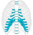 human rib cage symbol eps 10 vector image vector image