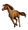 Running horse sketch with brown racehorse vector image vector image