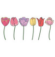 tulip mix vector image