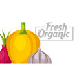 vegetables fresh food vector image vector image