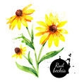 hand drawn watercolor rudbeckia black eyed susan vector image vector image