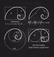 scheme of golden ratio section fibonacci spiral vector image