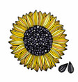 sunflower hand drawing for design vector image vector image
