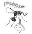 male chalcid wasp vintage vector image vector image