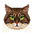 pixel siberian cat face isolated vector image