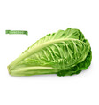 romaine cos lettuce 3d realistic food object vector image vector image