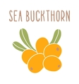 Sea buckthorn superfood vector image vector image