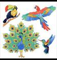 tropical exotic birds set vector image vector image