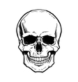Black and white human skull with jaw