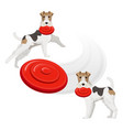 funny fox terrier dog with red frisbee in teeth vector image vector image
