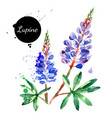 hand drawn watercolor lupine flower painted vector image vector image