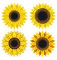set of bright yellow sunflower vector image