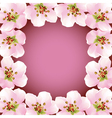 Frame with blossoming sakura japanese cherry tree vector image vector image