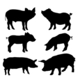 Pig silhouettes set vector image