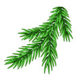 spruce branch vector image vector image