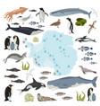 antarctic antarctica flora and fauna map flat vector image