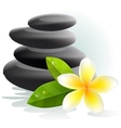 plumeria flower and spa stones vector image