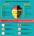 Infographics How to distinguish natural honey from vector image