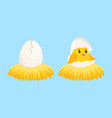 newborn chick cartoon egg and hatched chick vector image
