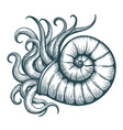 sea shell with mollusc tentacles vector image