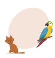 ara parrot little red cat and place for text vector image