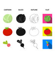 cabbage white tomato red rice potatoes vector image