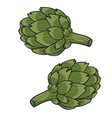 pair green artichokes cartoon isolated object vector image vector image