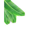 naturalistic colorful leaf of banana palm vector image vector image