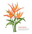 Bird of Paradise Orange vector image vector image
