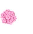 decorative sakura flowers bouquet design vector image vector image