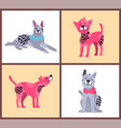 happy dogs with bright collars vector image vector image
