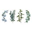 set eucalyptus vector image vector image