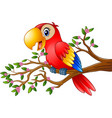 cartoon macaw on tree branch vector image