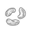 cashew nut set sketch vector image