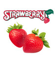 fruit strawberry white background image vector image