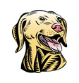 golden labrador retriever dog head vector image vector image